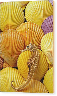 Sea Horse And Sea Shells Wood Print by Garry Gay