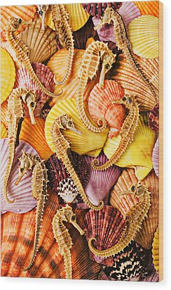 Sea Horses And Sea Shells Wood Print by Garry Gay
