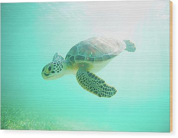 Sea Turtle Baby Wood Print by Monica and Michael Sweet
