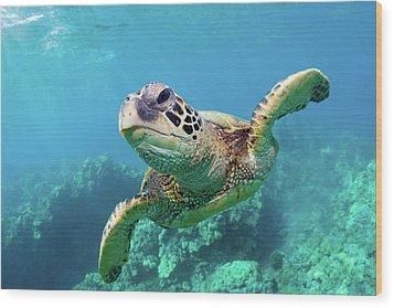 Sea Turtle, Hawaii Wood Print by Monica and Michael Sweet