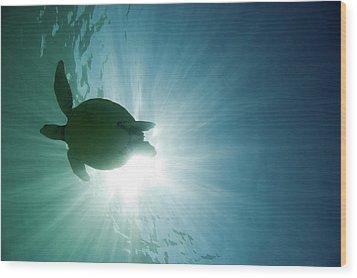 Sea Turtle Wood Print by M.M. Sweet