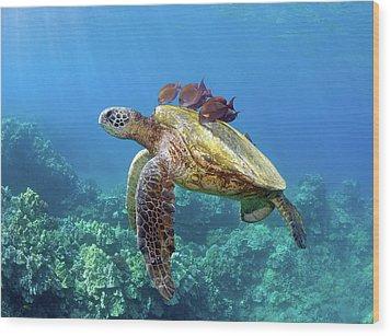 Sea Turtle Underwater Wood Print by M.M. Sweet