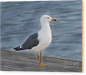 Seagull Portrait Wood Print by Sue Melvin