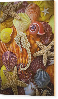 Seahorse And Assorted Sea Shells Wood Print by Garry Gay