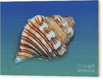 Seashell Wall Art 1 Wood Print by Kaye Menner