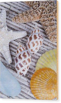 Seashells And Starfish Wood Print by Bill Brennan - Printscapes