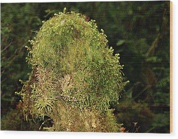 Seasons Of Magic - Hoh Rainforest Olympic National Park Wa Wood Print by Christine Till