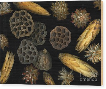 Seeds And Pods Wood Print by Christian Slanec