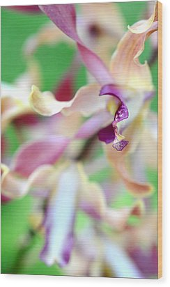 Sensual Touch Of Exotic II. Orchid II Wood Print by Jenny Rainbow