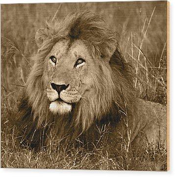 Sepia Lion Wood Print by Nancy D Hall