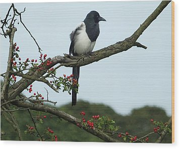 September Magpie Wood Print by Philip Openshaw