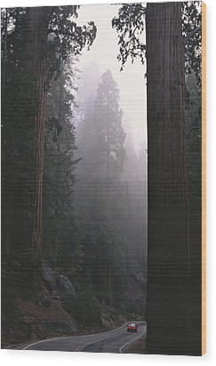 Sequoia Trees Dwarf A Car Traveling Wood Print by Carsten Peter