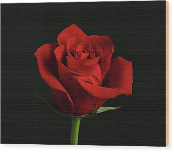 Simply Red Rose Wood Print by Sandy Keeton