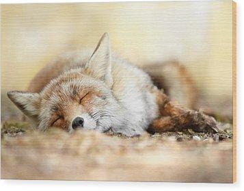 Sleeping Beauty -red Fox In Rest Wood Print by Roeselien Raimond