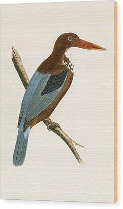Smyrna Kingfisher Wood Print by English School