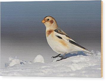 Snow Bunting (plectrophenax Nivalis) Wood Print by Mircea Costina
