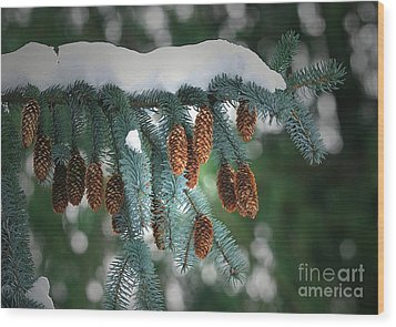 Snow Cones Wood Print by Sharon Talson