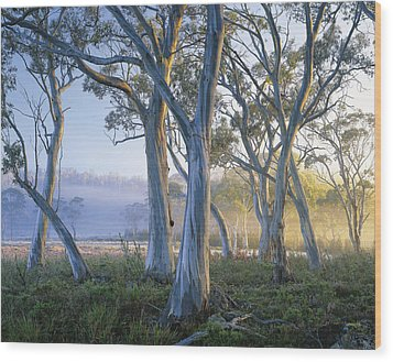 Snowgums At Navarre Plains, South Of Lake St Clair. Wood Print by Rob Blakers