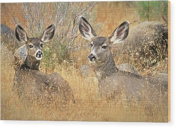 So Much For Your Secret Place... Wood Print by Donna Kennedy