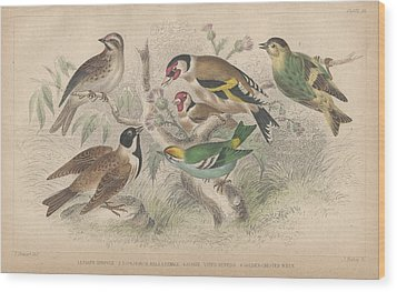 Songbirds Wood Print by Oliver Goldsmith