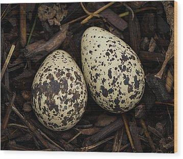 Speckled Killdeer Eggs By Jean Noren Wood Print by Jean Noren