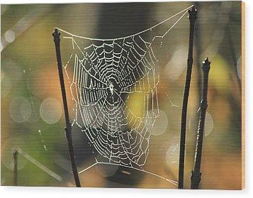 Spider's Creation Wood Print by Karol Livote