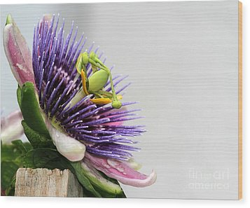 Spikey Passion Flower Wood Print by Sabrina L Ryan