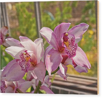 Spring Orchids Photograph Wood Print by Don  Wright