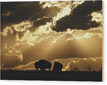 Stately American Bison Wood Print by George F. Mobley