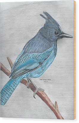 Stellar's Jay Wood Print by Don  Gallacher
