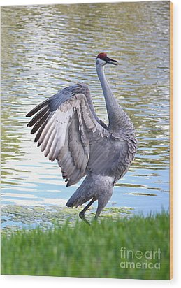 Strutting Sandhill Crane Wood Print by Carol Groenen