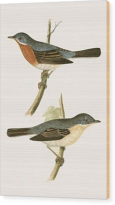 Sub Alpine Warbler Wood Print by English School