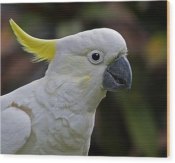 Sulphur-crested Cockatoo Wood Print by Larry Linton