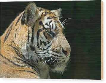 Sumatran Tiger Wood Print by Mary Lane