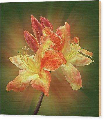 Sunburst Orange Azalea Wood Print by Gill Billington