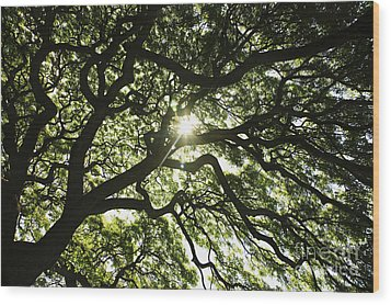 Sunburst Through Tree Wood Print by Brandon Tabiolo - Printscapes