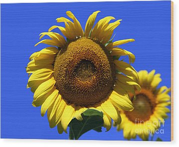 Sunflower Series 09 Wood Print by Amanda Barcon