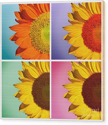 Sunflowers Collage Wood Print by Mark Ashkenazi