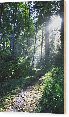 Sunlight Through Trees, Ecola State Wood Print by Natural Selection Craig Tuttle