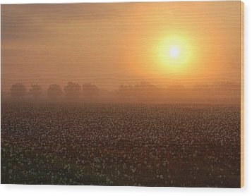 Sunrise And The Cotton Field Wood Print by Michael Thomas