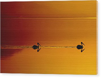 Sunset Cruising Wood Print by Laurie Search