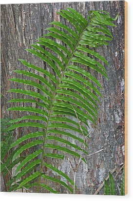 Swamp Fern Wood Print by Juergen Roth