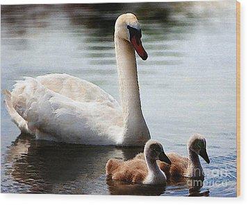 Swan Family Wood Print by Terril Heilman