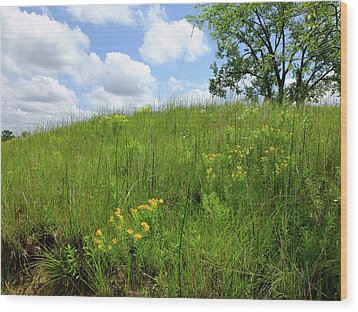 Tall Grass Hillside Wood Print by Scott Kingery