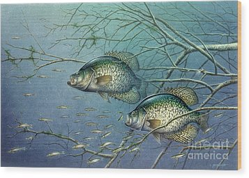 Tangled Cover Crappie II Wood Print by Jon Q Wright
