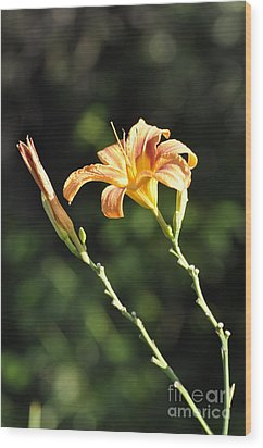 Tasmania Day Lily Wood Print by Penny Neimiller