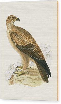 Tawny Eagle Wood Print by English School