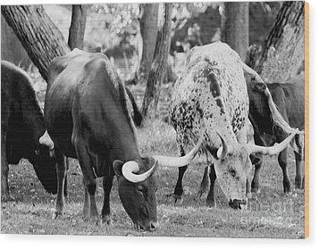 Texas Longhorn Steer In Black And White Wood Print by Alan Look