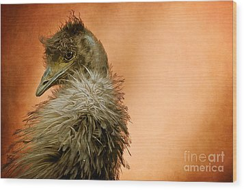 That Shy Come-hither Stare Wood Print by Lois Bryan