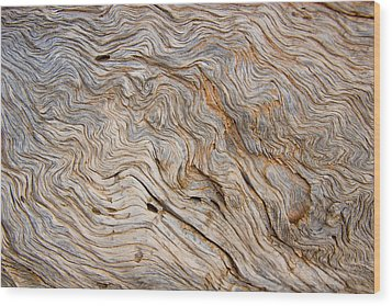 The Bark Of A Pine Is Sandblasted Wood Print by Taylor S. Kennedy
